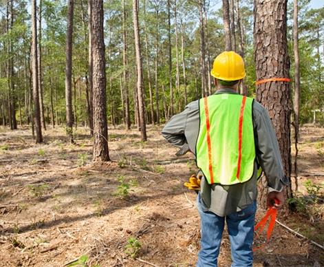 木业管理:「林木资源调查」